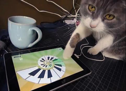 Kissa käyttää tablettitietokonetta